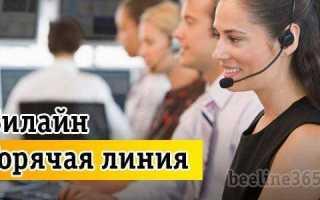 Телефон службы поддержки Билайн — как выгодно связаться с живым оператором из любой точки мира?