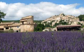 lavender-farm-france-320x200.jpg