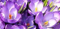 promo-spring.jpg
